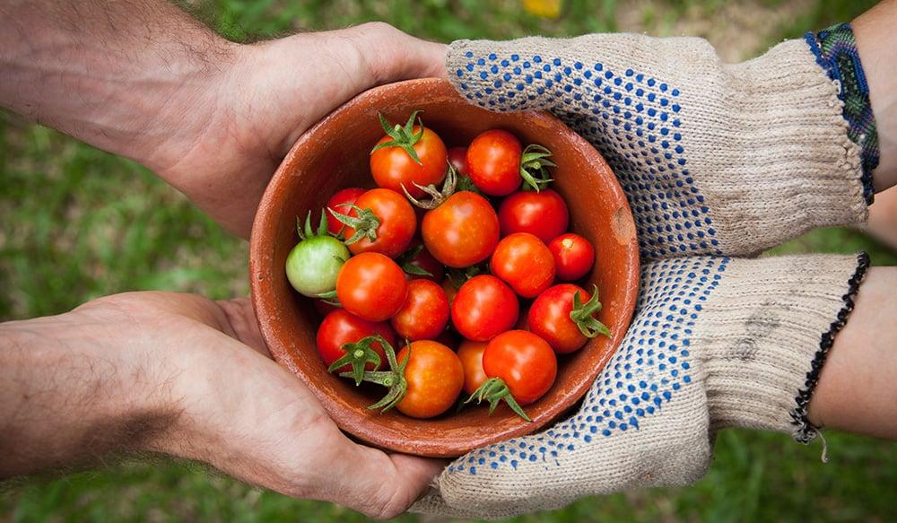 blog-24-improving-food-security-for-seasonal-workers